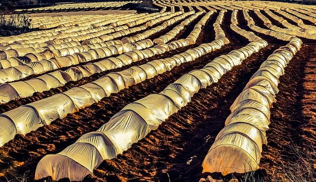 Évaluation des impacts environnementaux et financiers de l'agriculture locale en environnement contrôlé
