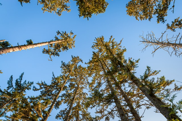 Opérationnalisation de la bioénergie forestière au Québec : Enjeux et solutions d'affaires